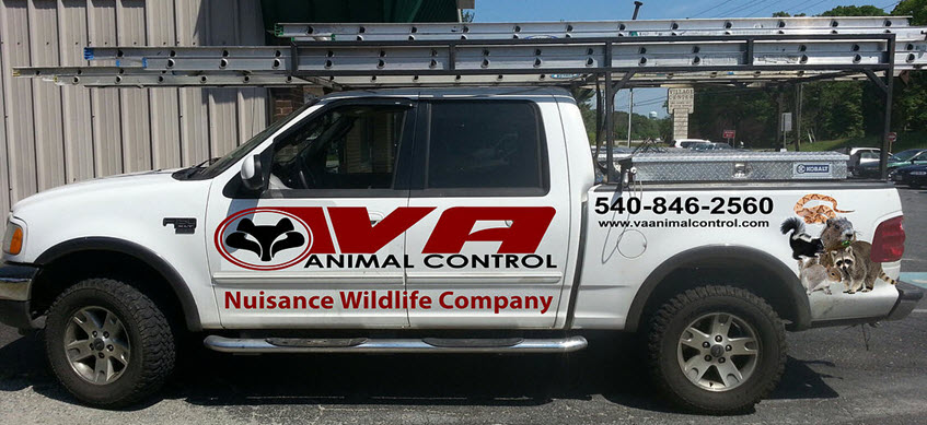 va-animal-removal-truck-847x389